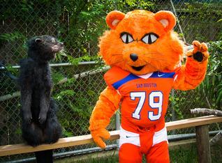 Hannah & SHSU Bearcat-3541