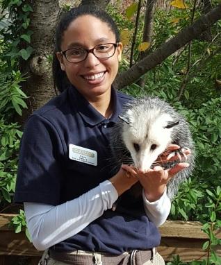 Opossum in hand
